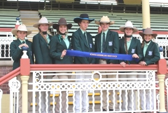 Cattle Club Ekka Excellence
