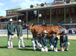 Cattle club success at Ekka
