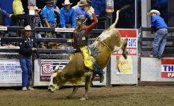 Tyler represents Australia in bull riding
